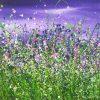 Wild Amethyst Flourish