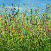 Tutti Frutti Meadows #2