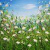 Delightful Daisy Meadows #4