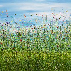 Morning Poppy Meadows #9